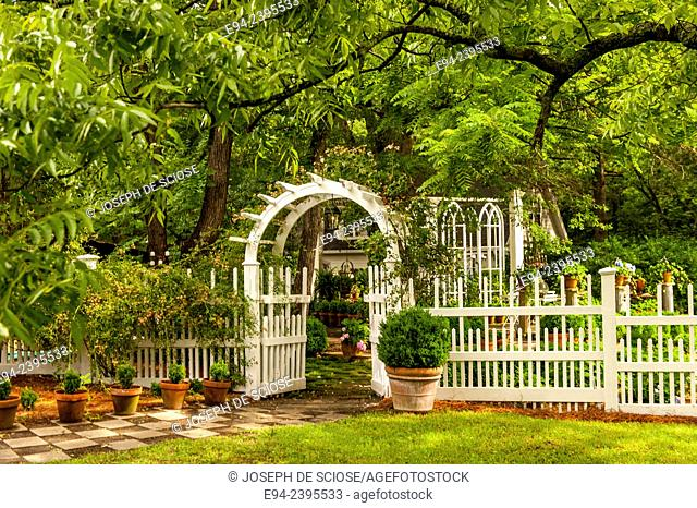 A white picket fence and arbor gate with a path, boxwoods and a large pecan tree. Georgia USA