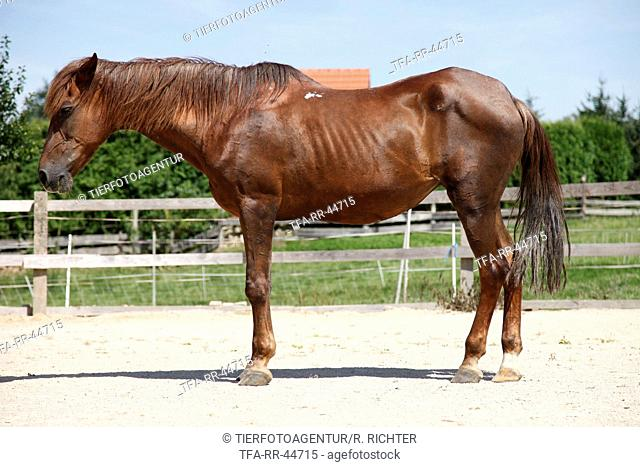 28 years old horse