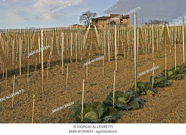 italy, lombardia, oltrepò pavese, vineyard