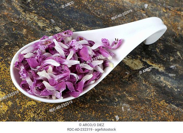 Spotted Dead-Nettle, blossoms, Lamium maculatum