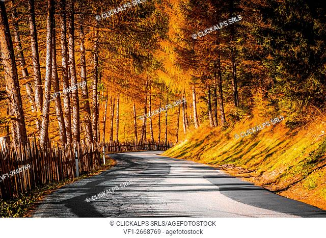 Autumn in the Alps, Funes Valley, Trentino Alto Adige, Italy. Curved road with orange trees