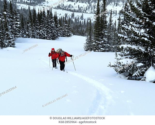 Sking near Parker Ridge in Winter in Jasper National Park, Alberta, Canada