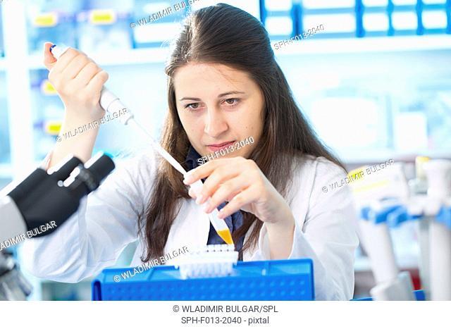Female laboratory technician using a pipette in the laboratory