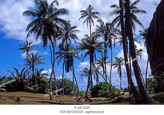 Palm trees in Seychelles
