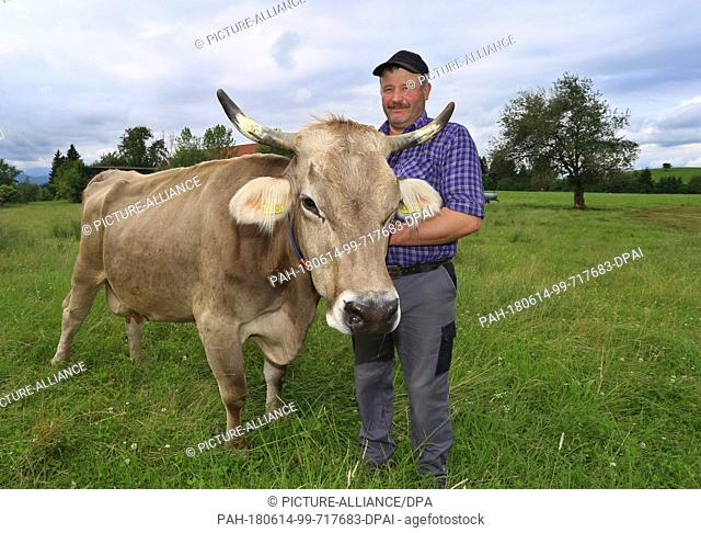 12 June 2018, Germany, Halblech: Farmer Markus Grieser standing with his cow Regina on a pasture. The pregnant cow was missing for five days