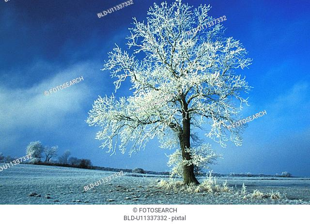 blue, frost, day, cold, aichner