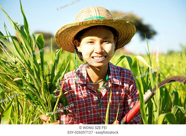 Portrait of a young Burmese girl farmer with thanaka powdered face harvesting in field