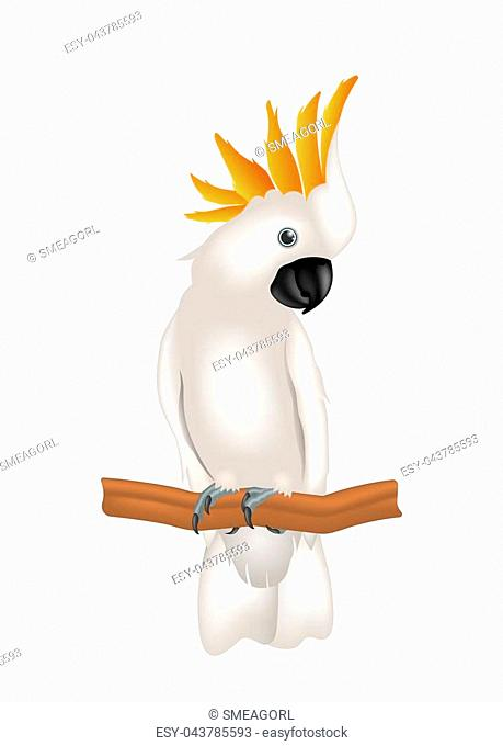 Mollucan Cockatoo Parrot On Branch, Exotic Bird with Crest Isolated on White Background - Illustration Vector