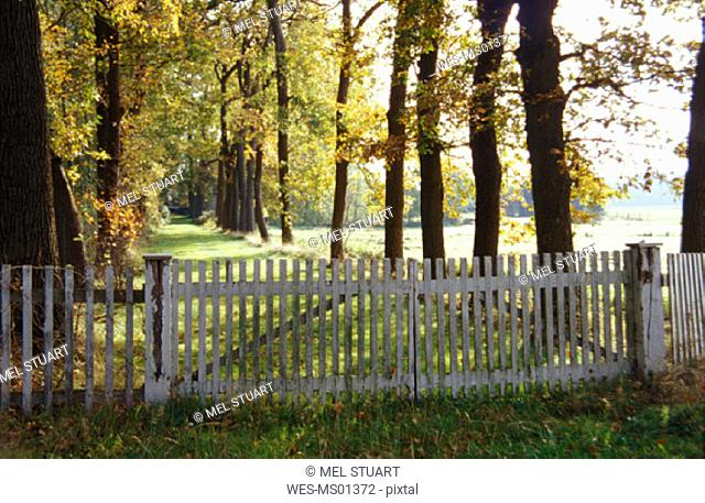 Fence blocking entrance to avenue, near Nortrup, Osnabrueker Land, Northern Germany