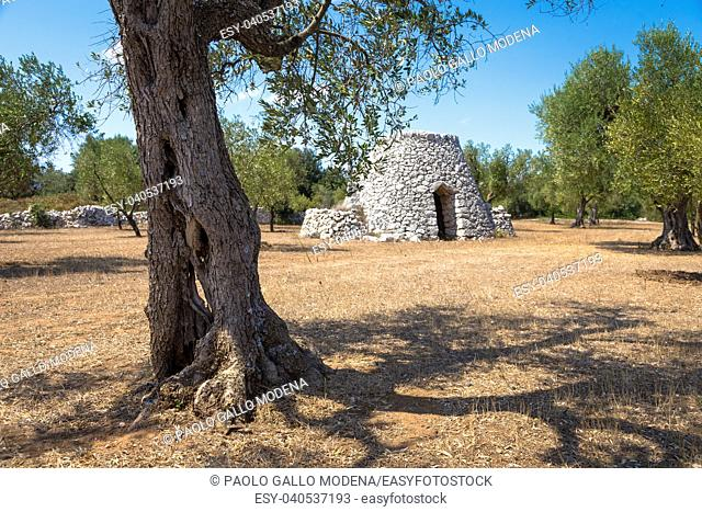 In Salento area, south of Italy, a traditional rural warehouse named Furnieddhu in local dialect. It's a traditional building made of stone in olives...