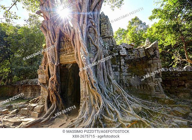 Distinctive strangler fig at Ta Som temple, Angkor, Siem Reap, Cambodia