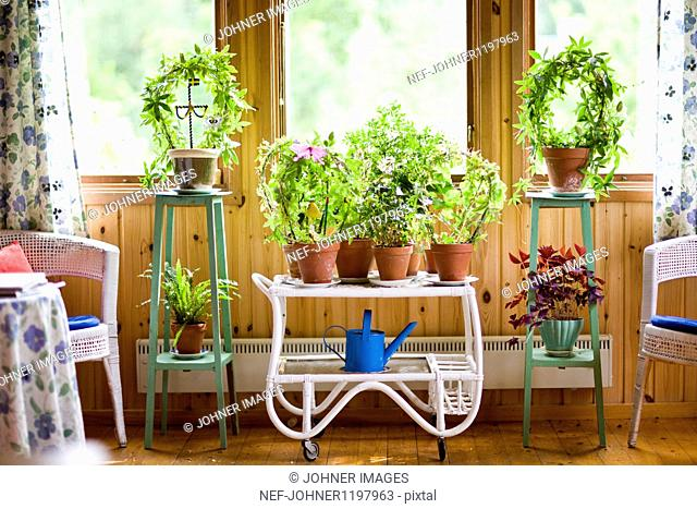 Plants and watering can in greenhouse