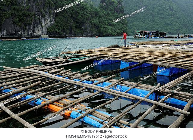 Vietnam, Quang Ninh Province, Halong Bay listed as World Heritage by UNESCO, fishing and oyster farm in the bay