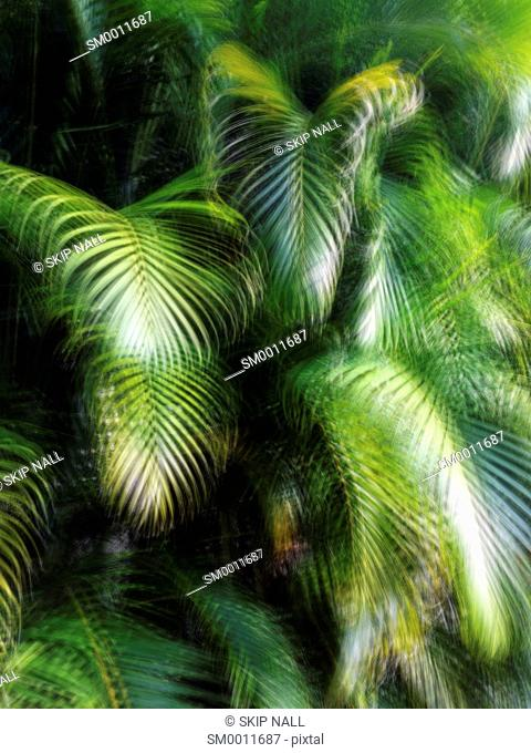 Long exposure of palm leaves in Florida