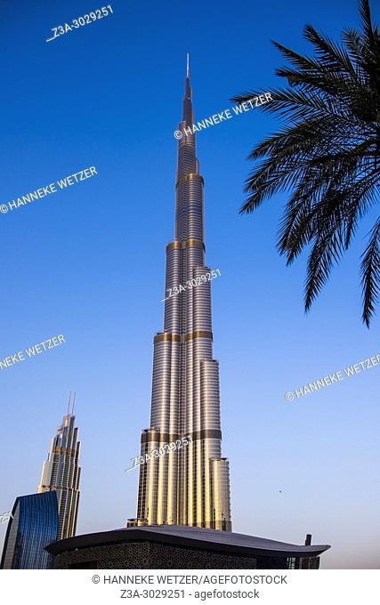 The Burj Khalifa in Dubai, the highest building of the world, during golden hour