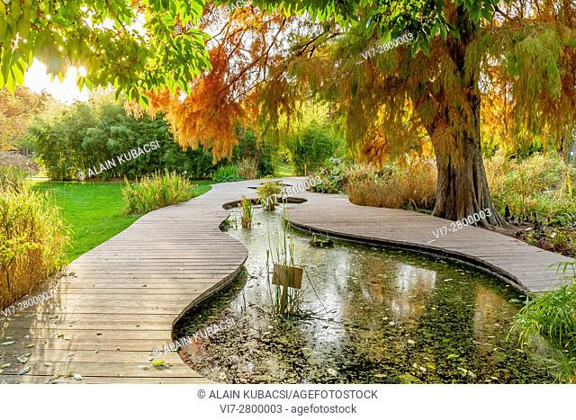 Bald-Cypress, Water Garden, Ecole du Breuil, Paris, France