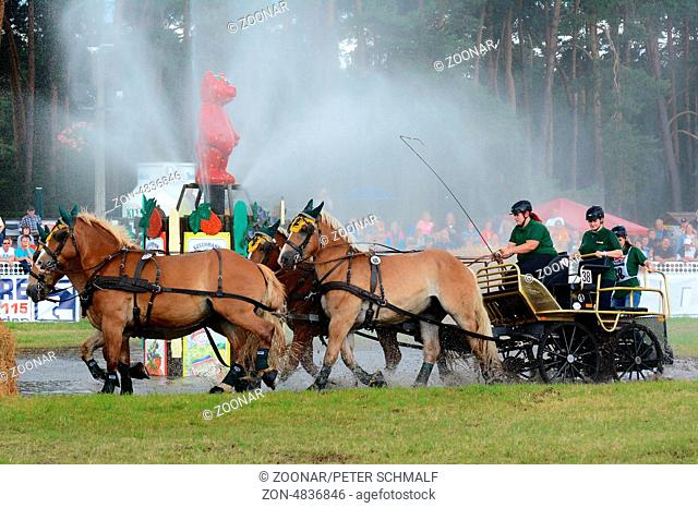 Draft Horse Racing in Germany