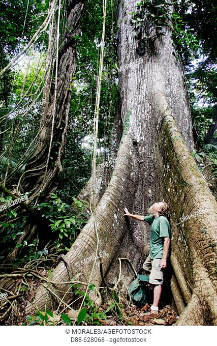 Otte Ottema, ornithologist and professional guide. Rain forest. Central Suriname Nature Reserve (1.6 million hectares). Republic of Suriname