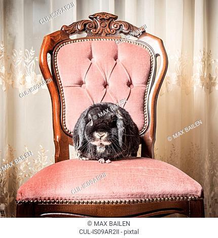 Portrait of rabbit sitting on chair