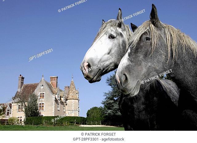 BREEDING OF PERCHERON HORSES, THE MANOR OF THE GRAND PRAINVILLE, SAINT-JEAN-PIERRE-FIXTE, EURE-ET-LOIR 28, FRANCEEURE-ET-LOIR 28, FRANCE