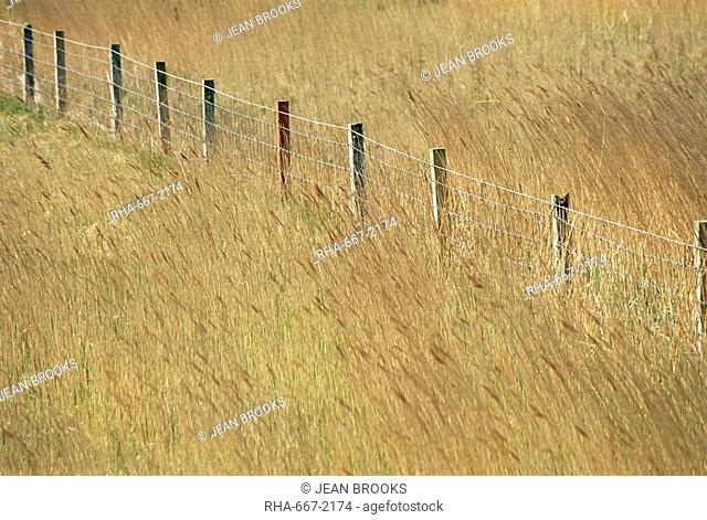 Fence posts through reeds, Isle of Harris, Outer Hebrides, Western Isles, Scotland, United Kingdom, Europe