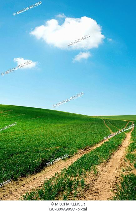 Tyre tracks through fields under blue sky