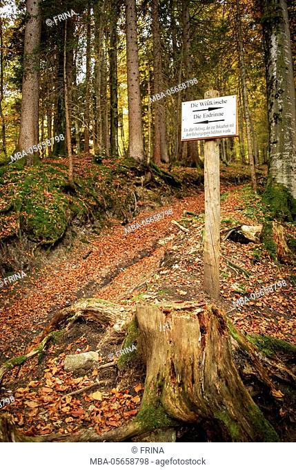 earth trench, nature trail, forest, Grainau, Upper Bavaria