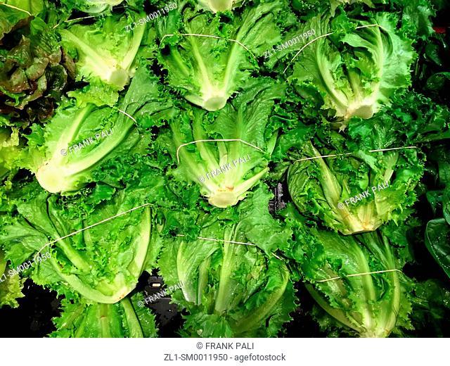 Farm fresh Organic Lettuce