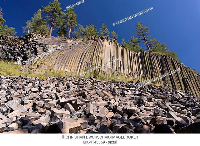 Devils Postpile National Monument, basalt columns, with pine trees, Mammoth Mountain, Reds Meadow Valley, Sierra Nevada, California, USA
