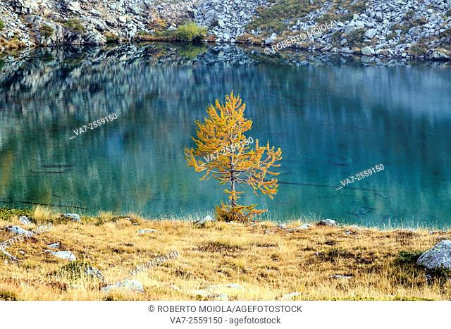 Autumn landscape at Lac Blanc. Natural Park of Mont Avic. Aosta Valley. Graian Alps. Italy. Europe