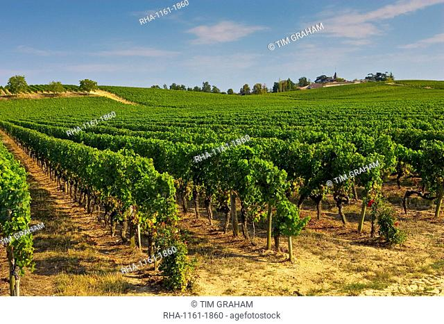 Vineyard, Preignac, Gironde region of France. The vineyard is in the grounds of the Chateau de Malle