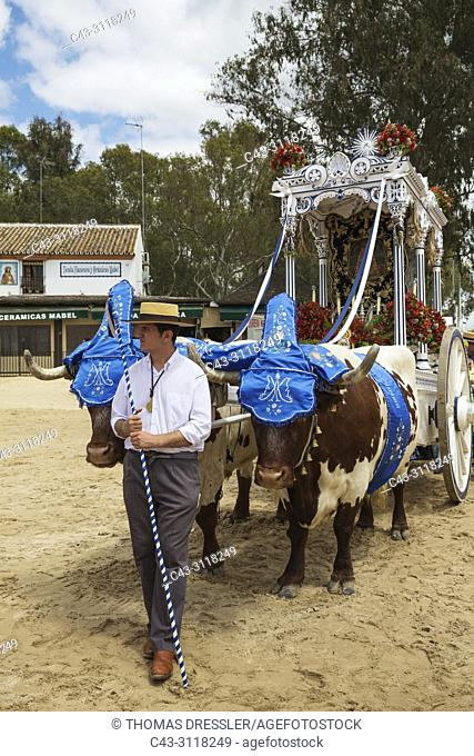 Dressed up man at their lavishly decorated ox-cart during the annual Pentecost pilgrimage of El Rocio. Huelva province, Andalusia, Spain