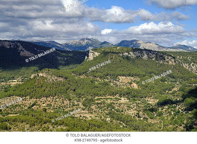 Son Cabaspre Pinewood, Esporles. Puig des Teix , 1064 mt, Majorca, Balearic Islands, Spain