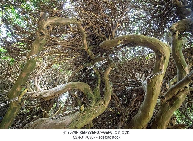 Branches among tree canopy, Levens Hall , Kendal, Cumbria , UK