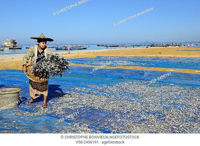 Myanmar, Rakhine State, Ngapali surroundings, Gyeik Taw village, Women carrying dried fish