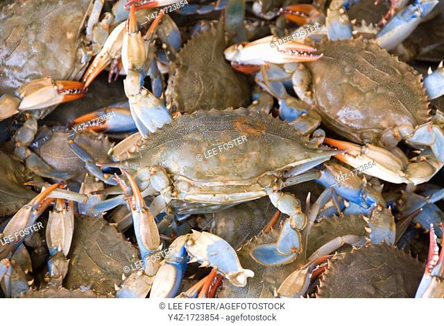 Washington DC, USA, blue crabs from the Chesapeake at the Maine Avenue Fish Market