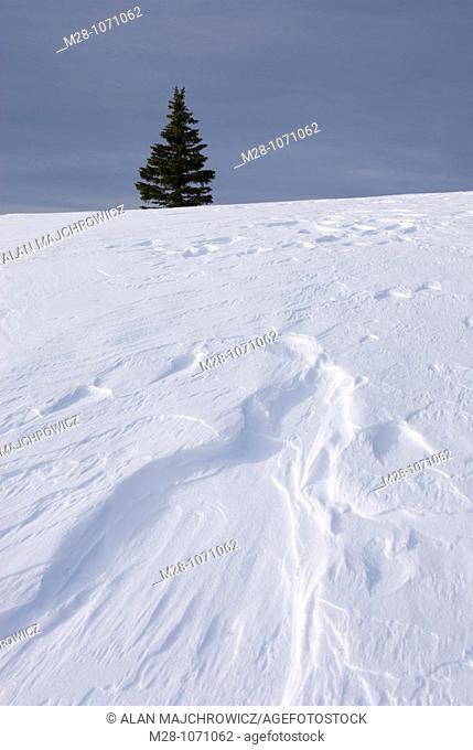 Wind blown snow also called sastrugi on ridge of Big Buck Mountain, Manning Provincial Park British Columbia Canada