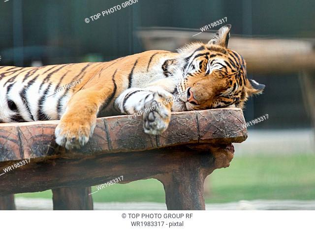 Thai Chiang Mai;zoo