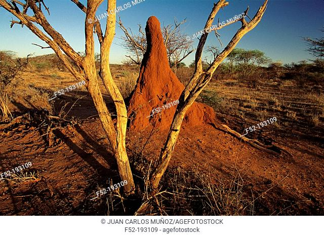 Termite's nest. Etosha National Park. Namibia