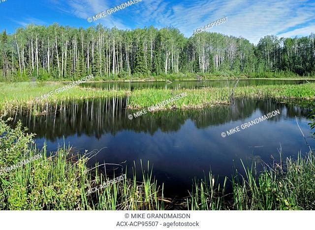 Wetland near the Yukon border Stewart Cassiar Highway near Yukon border British Columbia Canada