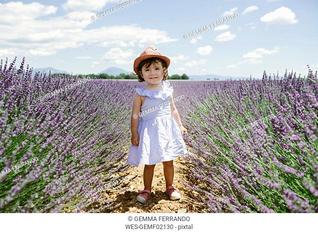France, Provence, Valensole plateau, Happy toddler girl standing in purple lavender fields in the summer