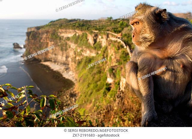 Monkeys along the cliffs next to the Ulu Watu temple Pura Luhur. Bali. Uluwatu Temple is a Hindu temple set on the cliff bank in south part of Bali Peninsula