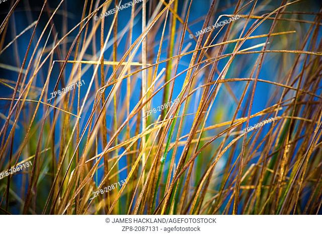 Grasses at sunrise during autumn in Torrance Barrens Dark Sky Preserve, Muskoka, Ontario, Canada