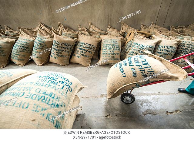 Addis Ababa, Ethiopia - Ethiopian worker carting hundreds of bags of arabica coffee beans read for export at Oromia Coffee Farmers Cooperative