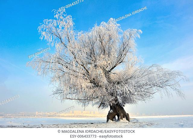 frozen tree on winter field in morning time