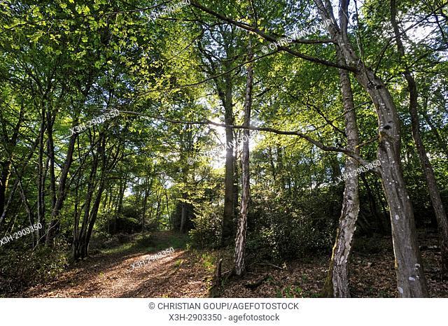 Foret de Rambouillet, Parc naturel regional de la Haute Vallee de Chevreuse, Departement des Yvelines, Region Ile-de-France, France