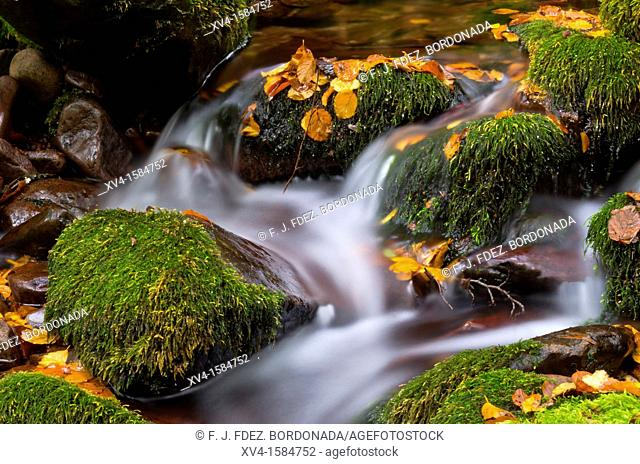 Autumn forest in Arce Valley, Navarre Pyrenees, Spain