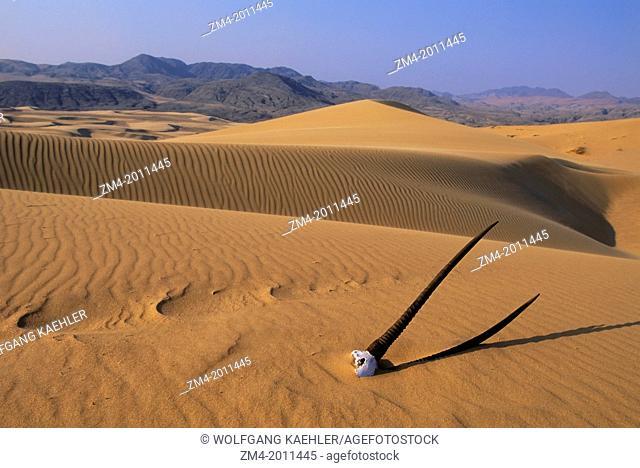 NAMIBIA, NAMIB DESERT, KUNENE RIVER AREA, SAND DUNES WITH ORYX SKULL
