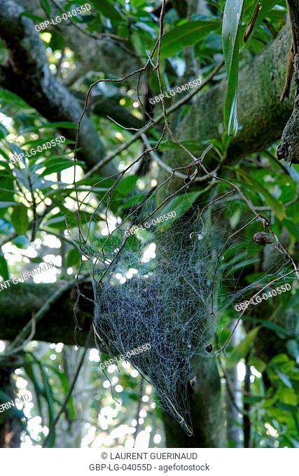 Tree, Spider's web, Nature, Trindade, Rio de Janeiro, Brazil