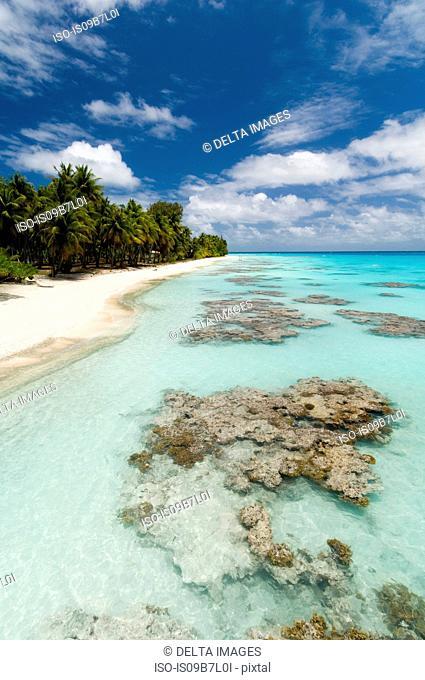 White sandy beach, palm trees and blue sea, Fakarava, Tuamotu Archipelago, French Polynesia